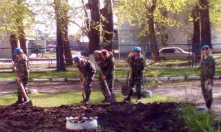 Кадеты Каменска-Уральского посадили 12 елей